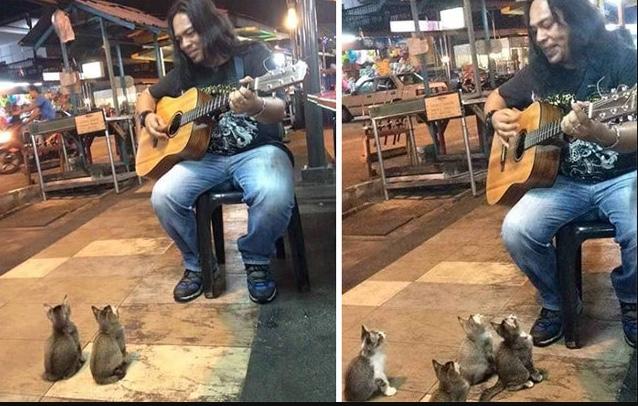 CatsListeningToMusician